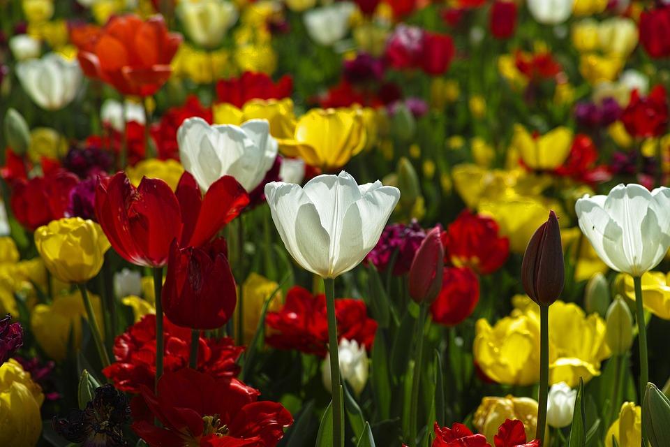 Tipy na okrasné květiny na zahradu