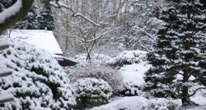 Jak udržovat zahradu v zimě? Tyto mýty neplatí!