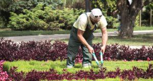Chyby, kterých se při tvorbě zahrady vyvarujte!