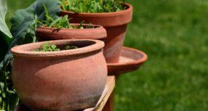 Bylinky – jak je pěstovat po celý rok?