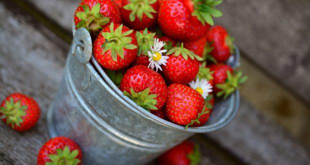 Samosběr jahod – místo, kde si sami nasbíráte jahod, kolik chcete! 2