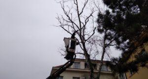5 jednoduchých pravidel pro rizikové kácení stromů