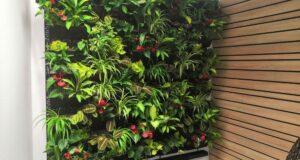 Ozdobte své stěny vertikální zahradou