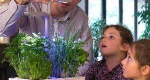Chytré květináče nejen pro domácí pěstování bylinek